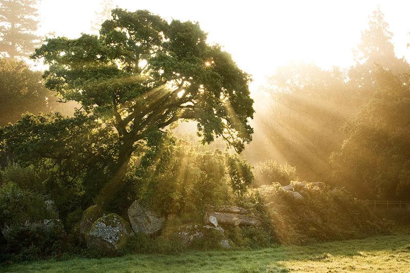 Træ við sólskini í bakgrundini